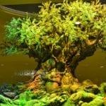 """【動画あり】WDWのアニマルキングダムの新ナイトショー""""Rivers of Light""""が2016年4月22日に公演開始へ!"""